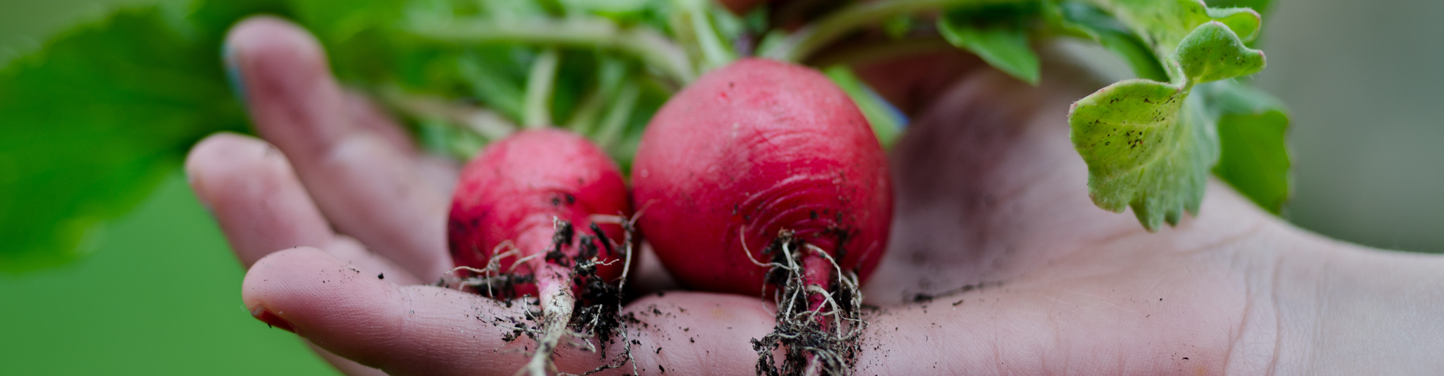 Click On The Radishes For Curbside